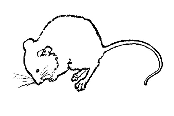 Αρουραίοι – Ποντίκια